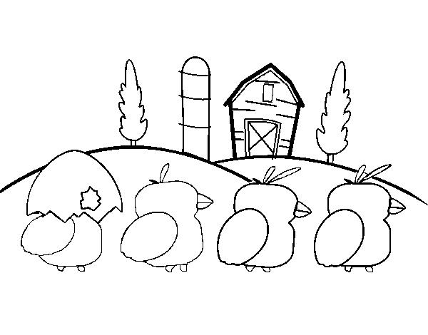 Dibujo De Pollitos Para Colorear Dibujosnet