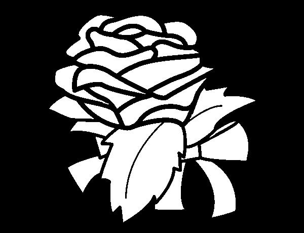 Dibujo de Rosa, flor para Colorear - Dibujos.net