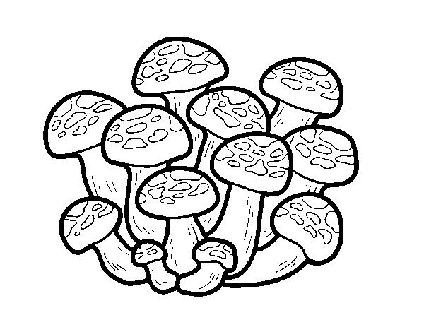 Dibujo de Seta bunashimeji para Colorear - Dibujos.net