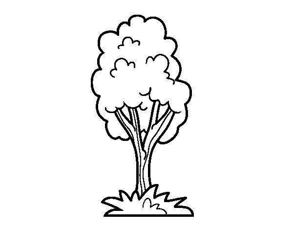 Dibujo Parque Infantil Para Colorear: Dibujo De Un árbol De Parque Para Colorear