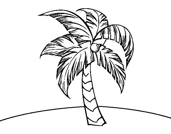 Dibujo De Una Palmera Para Colorear Dibujosnet